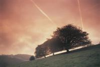 Trees dawn Wales