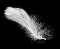White feather (XXL)