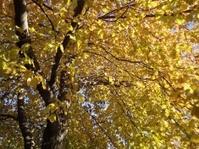 Overhead Autumn Canopy