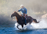 Cowboy gallops horse through stream
