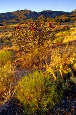 landscape southwest sunset sagebrush and cactus