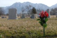 Plastic Flower in cemetery