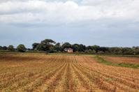 Furrowed Norfolk fields