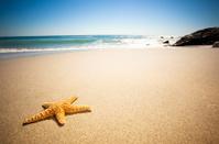 Star Fish Beach