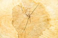 close up of wood grain.