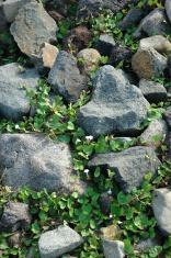 rock textured