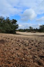 Soesterduinen sand dunes around Soest