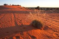 Sunrise on a dune
