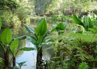 Malagasy Rain Forest