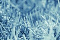 freeze plateau weed