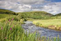 Stream in the Scottish borders