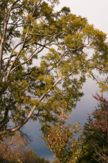 Oak branch before thunderstorm