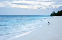big bird standing on the beach