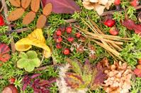 collage of autumn