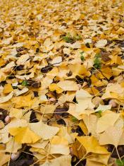 Rain on fallen leaves in autumn