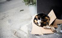 Stray Cat's Sleep