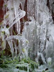 Frozen Water Sculpture around Plants