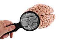 Examining The Brain Isolated