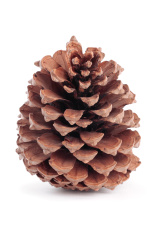 Christmas pinecone decorations