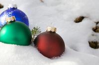 Bulbs in snow