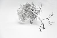 Winter white tree on snow background