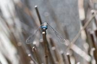 Dragonfly stalks