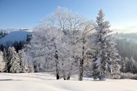 Winter's Tale, White Xmas, Beautiful Snowy Landscape in Central