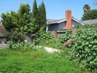 Backyard in need of gardening
