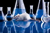 Laboratory rat