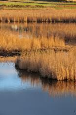 St.Ouen's pond,Jersey.