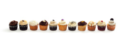 Fancy Frosted Gourmet Cupcakes Variety in a Row on White