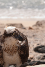 See eagle