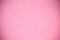 Spiderweb on pink