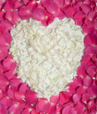 Cream heart in pink rose petals