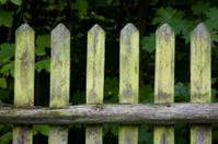 old wodden fence