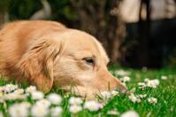Sad dog in spring
