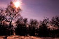 Dramatic violet sunshine behind trees