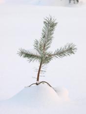 Afbeeldingsresultaat voor small tree
