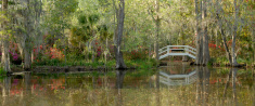 Ornamental bridge in southern garden
