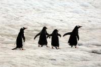 Antarctic friends