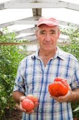 Men with tomatos