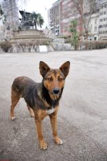 Stray Dog in Santiago