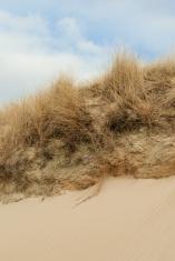 Dune gras at the beach