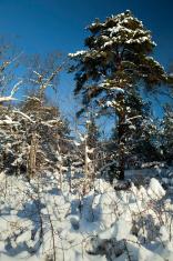 Heavy snowfall in Sweden