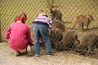 Zoo attendance