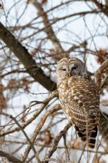 Owl Eyes Open
