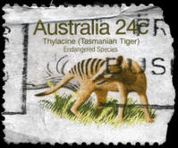 ... woman in tiger painted jacket · Antique illustration of cicindela  scalaria · Tiger Holding A Briefcase With Background · Tasmanian Tiger ... aef241eb6