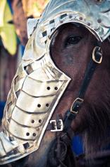 Knight's Horse