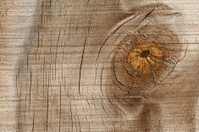 knot in wood that looks like an eye