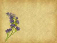 lavender on paper background